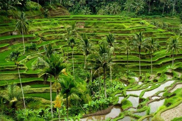 rice-wisdom-001-home